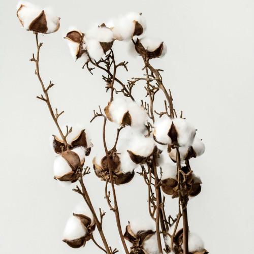 品牌方如何運用生物方法,鑑定棉花產地